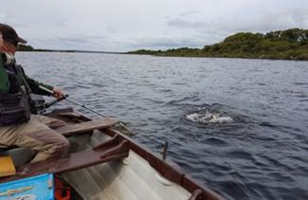 Padraig Traynor landing a lively trout near Castle Island on L. Conn