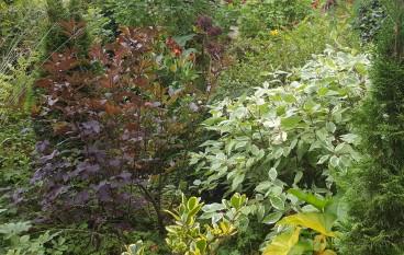 A Ballina Botanical Masterpiece … Paul Kirwin of Topline Archers